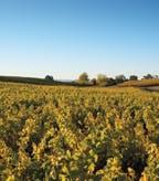 Clos Pegase Mitsuko's Vineyard