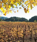 Clos Pegase Dunaweal Vineyard