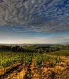 Primitivo Puglia Italy Vineyard