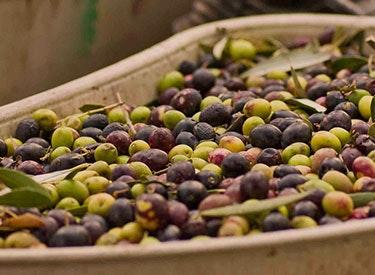 brc olives 375x275