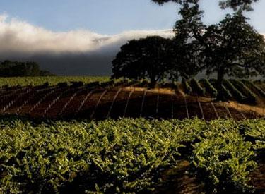 brc vineyard 375x275
