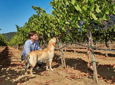 chw cam and dog vineyard 375x275