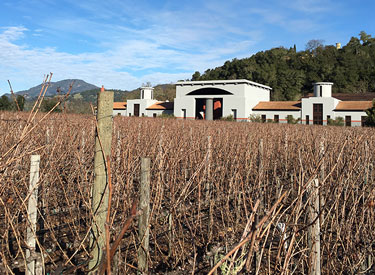 cp napa vineyard rows 375x275