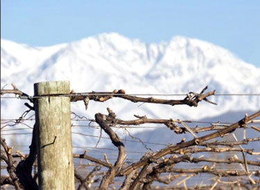 goug vine mountain 375x275