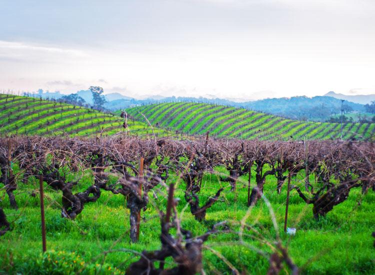 gw vineyard 750x550