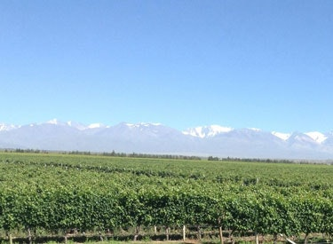 tds argentina vineyard and mtn 375x275
